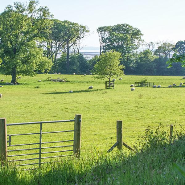 Grey Abbey's parkland