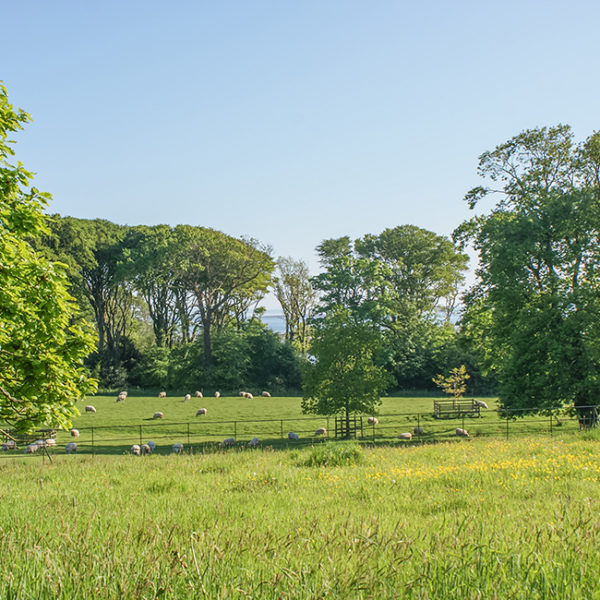 Grey Abbey's parkland