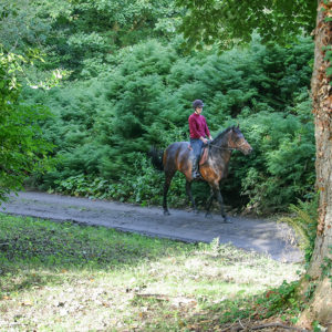 Riding on the Grey Abbey Estate