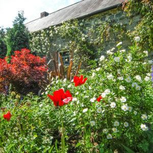 The Granary border flowers 3