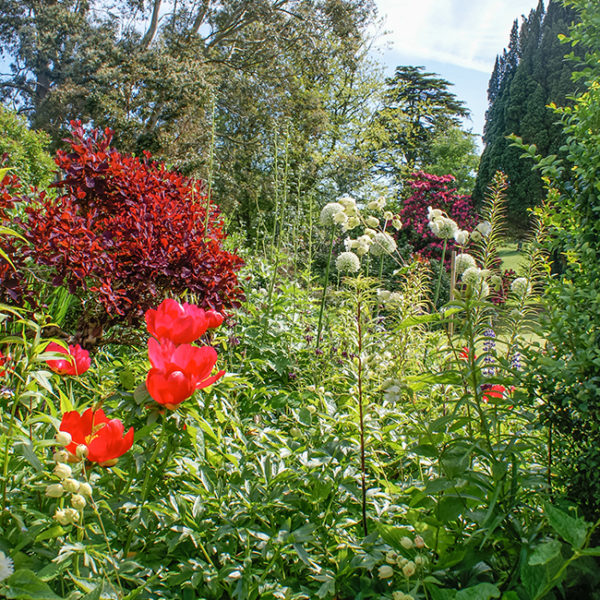 Grey Abbey border flowers