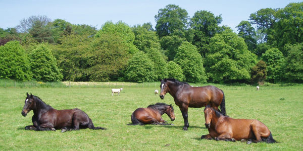 Horses in Grey Abbey's fields
