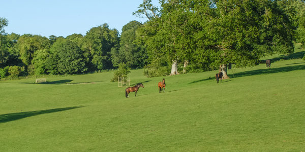 Horses in Grey Abbey's parkland